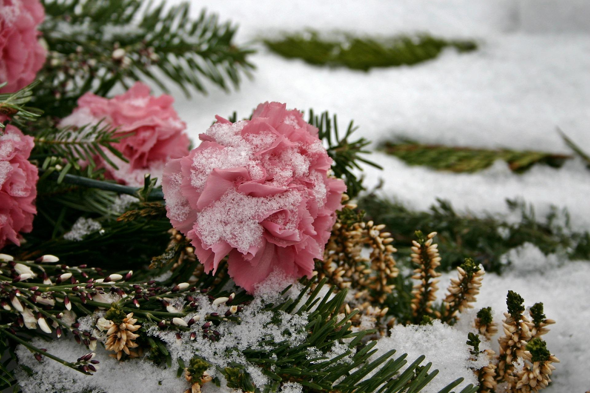 Fleurs de cimetière qui ne gèlent pas